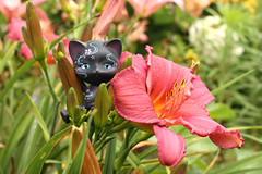 (lookingdivine) Tags: abjd bjd bjdcat doll dollphotography sakurapaper cat