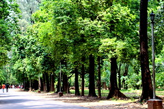 National Botanical Garden, Mirpur, Dhaka (reZwanUK) Tags: botanical garden walkway dhaka mirpur bangladesh
