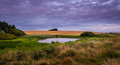 The Pond. (Tony Brierton) Tags: 30716 ballinesker camping cowexford coast curracloe sunset