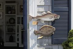 Pisces (Steve Bosselman) Tags: fish pisces cod flounder capecod