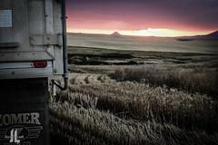 IMG_8634 (larzz4444) Tags: chester montana winterwheat chestermontana gleaner drylandfarming sweatgrasshills joplinmontana wheatharvest sunset