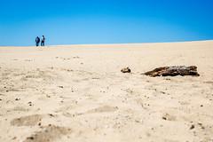 At the Stuifzand (elmarburke) Tags: dne veluwe dehogeveluwe sand duin dune dunes dnen hogeveluwe nationalparkdehogeveluwe stuifzand zand