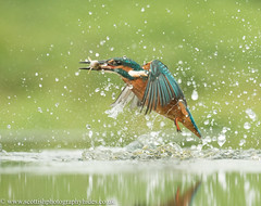 28th July 2016 Kingfisher NEW HIDE (Fudgey2010) Tags: