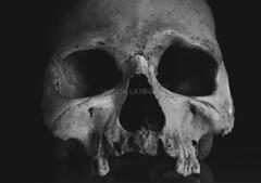 (MariaLatova) Tags: marialatova institutoarqueologicoaleman portugal torresvedras cabeo cabezo arruda ii esqueleto hueso craneo humano caii1109 mmlt006006 lisboa
