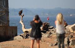 They've been spotted! - Tamara Laine and Laurie and the juvenile bald eagle - Staten Island, New York (superpugger) Tags: statenislandbaldeagles bald eagles baldeagles newyorkcitywildlife lawrencepugliares lpugliares