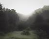 Small Bush in Fog (Rachelle Mendez) Tags: california trees color grass fog 35mm landscape photography losangeles hills fullframe nakedlandscape explorecalifornia