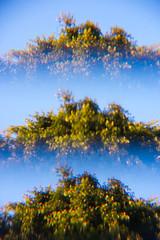 Cosas de verano (Atse B) Tags: ocean light sunset red sea summer sky cloud naturaleza sun color bird film sol nature canon mexico atardecer mar holga flamingo parrot pajaros nubes verano serie flamenco loro lightroom 2015 atse