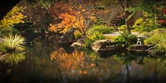 Tranquility (Joe Szalay) Tags: autumn trees reflection fall georgia fallcolors panoramic japanesegardenpond gibbsgardens gibbsgarden