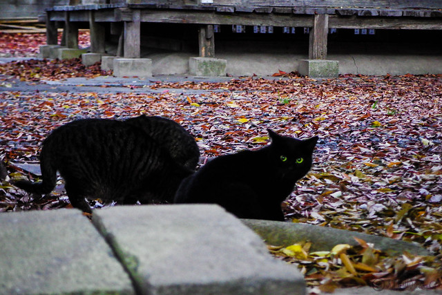 Today's Cat@2014-11-29