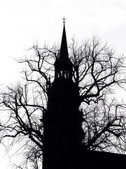 Bad Religion (Feldore) Tags: trees ireland tower church silhouette fairytale contrast mono james weird high scary university sinister bare olympus belfast m panasonic spire queens story r horror 28 northern mchugh grimm em1 35100 feldore