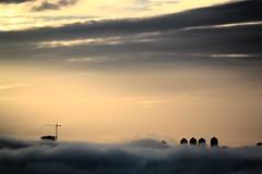 IMG_9021 (TheMummy'sEye) Tags: fog vancouver sunrise godlight