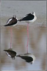 DSC_3743_118 (Gigi Sanna) Tags: bird birds nikon 150 uccelli 600 tamron d600 150600