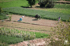 Tinerhir (andrea.prave) Tags: oasis morocco maroc atlas marocco medina oasi atlante tinerhir  almamlaka errachidia  tizgui  visitmorocco almaghribiyya  baladiatinghir tourdelmarocco alrshdiyya