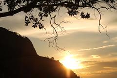 Brilho do sol na rvore (Vinicius Montgomery) Tags: montgomery vincius prof pedro itajub