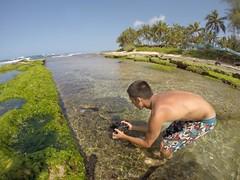 Hawaii 2015 (BOMBTWINZ) Tags: beach hawaii surf hiking woody diving surfing hike adventure explore sup aloha hilife 808 paddleboard gopro hero3 blackedition bombtwinz gopole kaikinibikinis alohalife