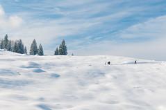 Winter_047_ Premium-Winterwanderweg  Reit im Winkl (wenzelfickert) Tags: schnee winter sky people snow landscape bavaria oberbayern himmel menschen landschaft zima snih reitimwinkl premiumwinterwanderweg