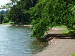 (IgorCamacho) Tags: park parque summer brazil lake tree nature water paran gua brasil way lago natureza southern vero rvore sul caminho londrina