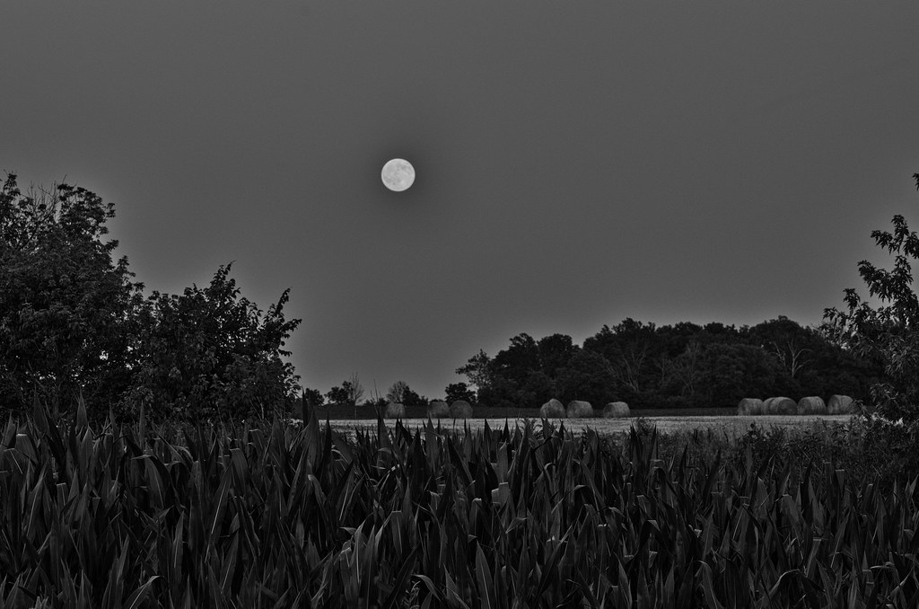 Image result for moon over hay fields black and white photo