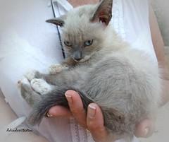 """Bebita Calisy  """" Rescatada """" 012 (adioslunitaadios) Tags: gatocomn bebes airelibre macro fujifilm"""