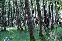 (Juliet Alpha November) Tags: fuji fujifilm professional 160 nps expired film analogue analog 35mm forest wald outdoor trees bume jan meifert
