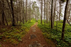 East Coast Trail (Karen_Chappell) Tags: eastcoast eastcoasttrail newfoundland nfld torscove mobile tinkerspath trees woods forest path trail scenery scenic landscape green canonefs1022mm wideangle avalonpeninsula