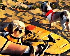 Surf's Up Dawg (johnnyp_80435) Tags: boogieboard prisma seashore gulfcoast nationalseashore padreisland beach dog shihtzu