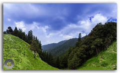 The breathtaking view of forest and the meadows in Janjehli! (FotographyKS!) Tags: road street travel light vacation panorama india abstract mountains nature horizontal clouds forest trekking trek landscape outdoors temple town colorful natural bright background meadows peak bluesky bluemountains panoramic hills tokina vehicles environment greenery hikers nikkor mandi hindu uphill refreshing manali mothernature himalayas height cloudscape himalayan himachalpradesh slopes greengrass naturephotography shikari travelphotography beautyinnature pandavas natureabstract janjehli photoborder huntergoddess tokina1116mmf28 naturebackground shikaridevi shikarimata rooflessshrine