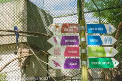 DSC_2400-HDR (Pascal Gianoli) Tags: beauval zoo zooparc saintaignansurcher centrevaldeloire france fr pascal gianoli pascalgianoli