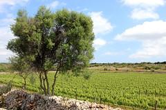 field (stephs photography) Tags: travel blog menorca adventure mountainbike challenge across island