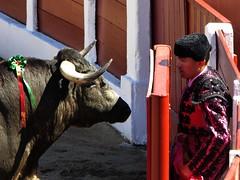 face a face (aficion2012) Tags: ceret 2016 novillada corrida toros bulls bull fight novillos france francia d mario y hros de manuel vinhas torero matador novillero