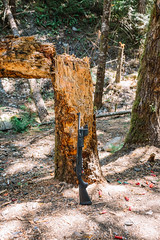 (gilbert terrazas) Tags: shotgun remington 870 12g rangefinder 35mm portland oregon pdx outdoors pnw pacific northwest