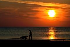 De Koog (l-vandervegt) Tags: 2015 nikon d3200 nederland netherlands holland niederlande paybas noordholland texel dekoog sunset zonsondergang orange oranje color kleur hond dog shilouette