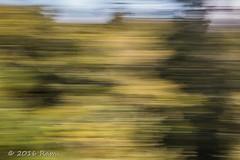 52 Weeks of Pix 2016 - Line From a Song (CBRenee) Tags: dizzy 52weeks2016 tommyroe week30 coosbay backyard trees 1969 spinning green