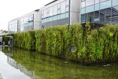 DSC00474 (magnusbjarklind) Tags: green walls vertical gardens moss