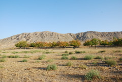 Batken region, Kyrgyzstan (Mountain Partnership) Tags: mountain batken partnership mountains apricot kyrgyzstan desert