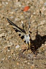 Poço da Broca, Serra da Estrela (Carlos Pinto 73) Tags: serra estrela poço broca butterfly