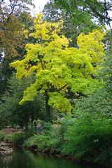 D15604.  Lloyd Park. (Ron Fisher) Tags: lloydpark walthamstow e17 london londone17 trees green path pentax pentaxkx tamron tamron18200mm tamronaf18200mmf3563xrdiiildasphericalif park reflections yellow