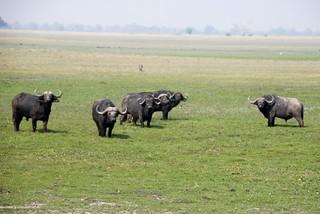 Namibia Dangerous Game Safari - Caprivi Strip 54