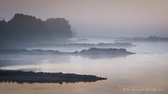 Couleurs d'aurore 2 (Bertrand Thifaine) Tags: d5100 aube automne brume champtoceaux loire pi oiseau reflets pastel dgrad oudon fleuve
