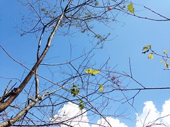 Low Angle View Clear Sky Blue Bare Tree Nature Growth Sky Beauty In Nature Outdoors Branch at  () Tags: lowangleview clearsky blue baretree nature growth sky beautyinnature outdoors branch