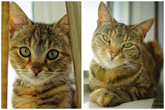 Caitlin @2 (southseadave) Tags: a7 sal30m28 caitlin cute cat kitten 2yearsold