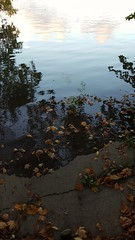Leaves on edge of water at high tide (jaym812) Tags: water creek edge leaves bigtimbercreek westville nj hightide newjersey 2016 fall fallday