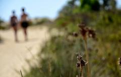 Il viale degli amanti [Explore n.40 - 26 ottobre 2016] (encantadissima) Tags: majatabeach lidorossello realmonte agrigento sicilia spiaggia bokeh