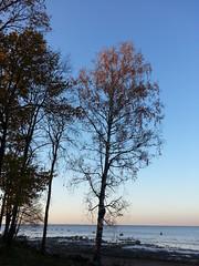 .   . (presteza777) Tags:      finland alexandria russia peterhof sea cost