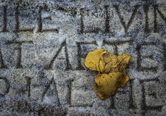 Gravestone - Philadelphia, Pa (redforester) Tags: anthonycedrone grave headstone gravemarker leaf yellowleaf fall