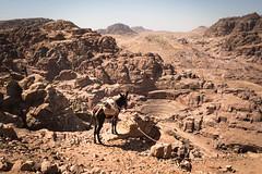 Donkey break - Petra, Jordan (M. Khatib) Tags: donkey desert petra jordan amphitheater nabatean arab arabian mountains landscape cave caves burial tomb unesco heritage culture