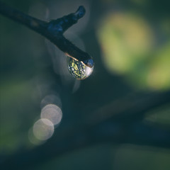 The forest in a drop of water (loic.pettiti) Tags: programmanual f56 speed1320 iso1400 focallength1300mm35mmequivalent1950mm affinetuneadj0 focusmodeafc afareadynamicarea3dtracking shootingmodesingleframe autoiso vron ev13 meteringmodemultisegment wbauto1 picturecontrolstandard focusdistance447m dof026m434460 hyperfocal15066m f456 g vr lenstamron70300mmf456divcusd