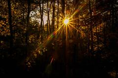 Rays of Light (Tanja Heckert) Tags: rays sunlight sunset light sunshine sonnenstrahlen sonnenschein wanderlust forest wald trees licht fall autumn herbst spaziergang hike state park natur