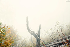 11 Dry Mountain Fog (kana movana) Tags: dry mountain serbia balkan forest tree fog foggy weather fall autumn mountaineering walk tracking nature outdoor travel journey climbing d90