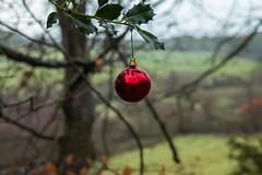 Merry Christmas (trevorhicks) Tags: christmas winter holly bauble